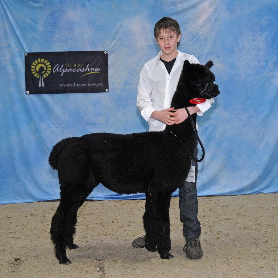 Alpacashow Assen  2011 Dhunya 1e prijs